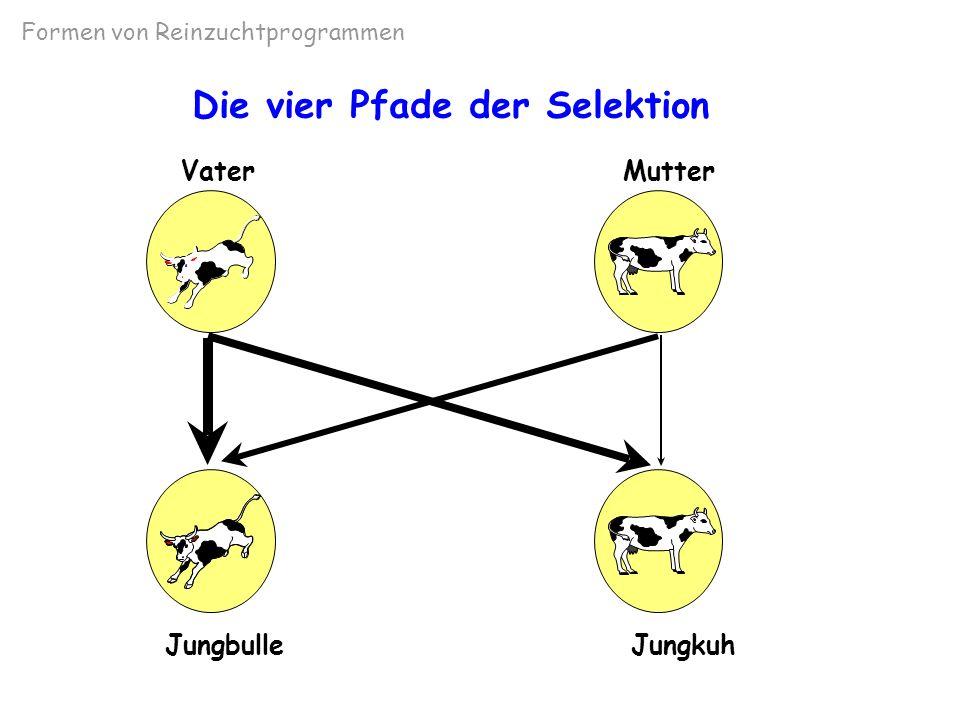 Die vier Pfade der Selektion