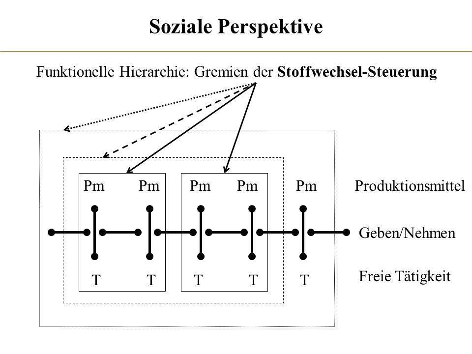 Soziale Perspektive Funktionelle Hierarchie: Gremien der Stoffwechsel-Steuerung. Pm. Pm. Pm. Pm.