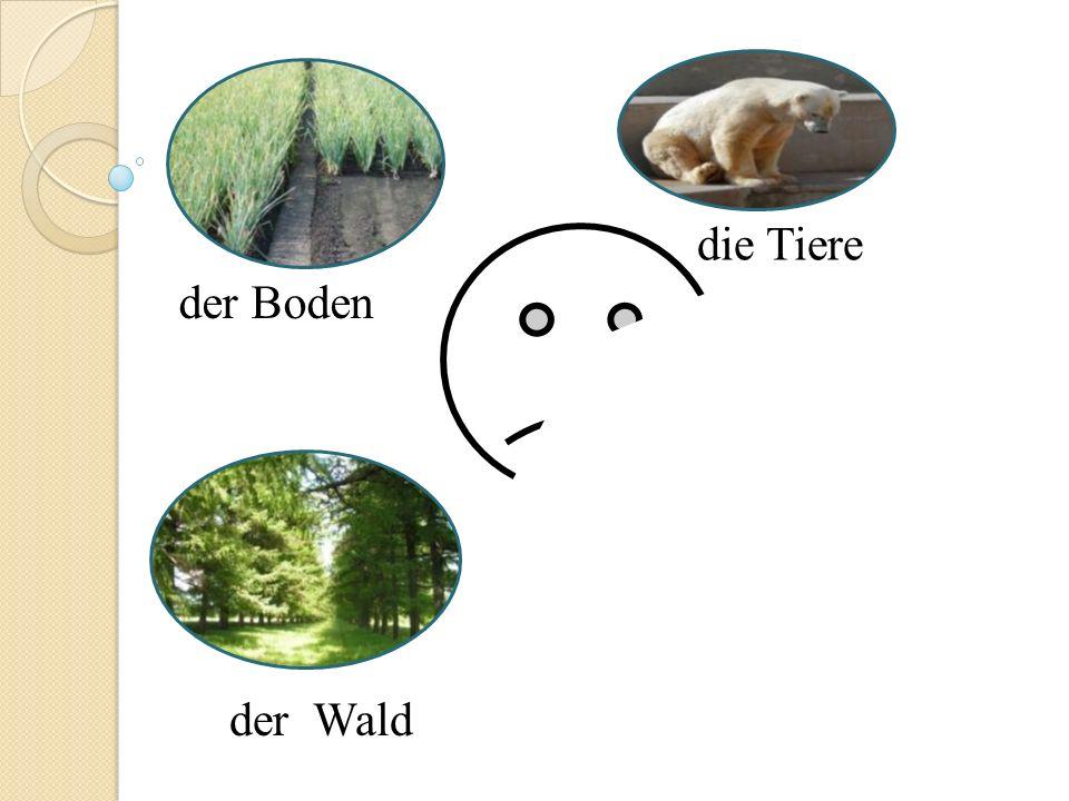 die Tiere der Boden der Wald