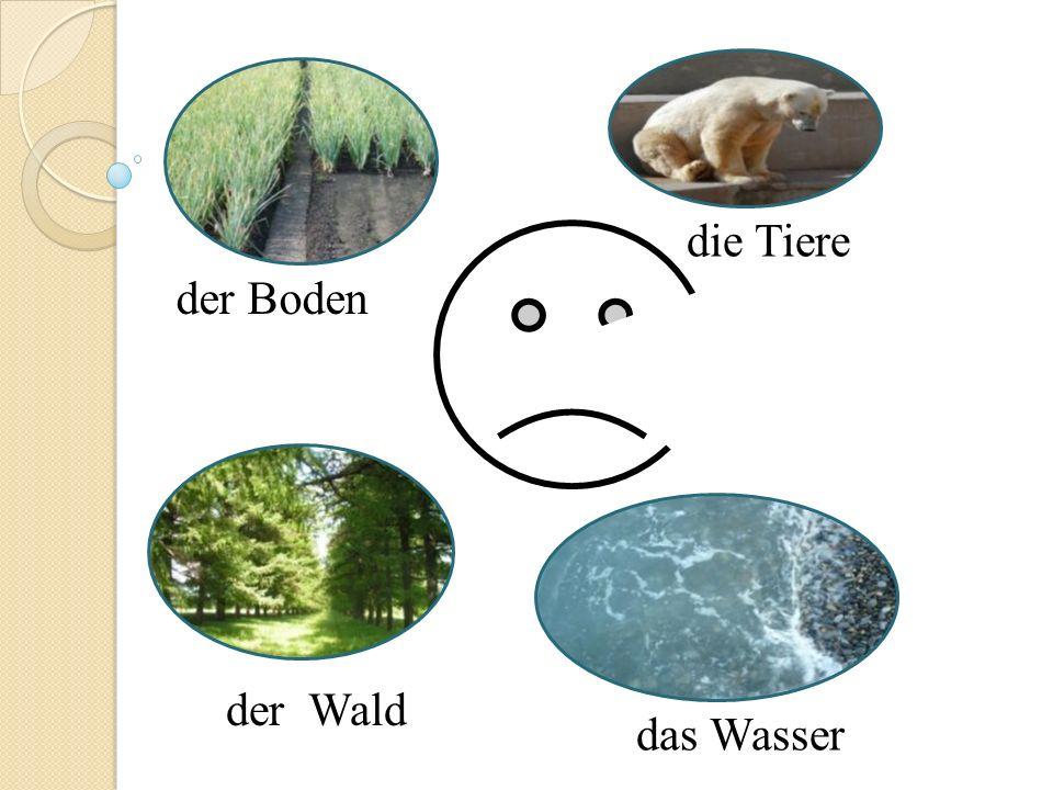 die Tiere der Boden der Wald das Wasser
