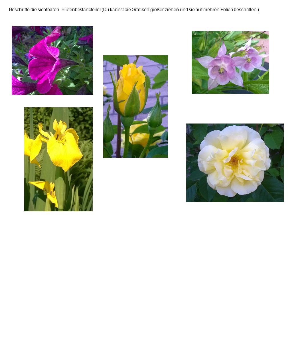 Beschrifte die sichtbaren Blütenbestandteile