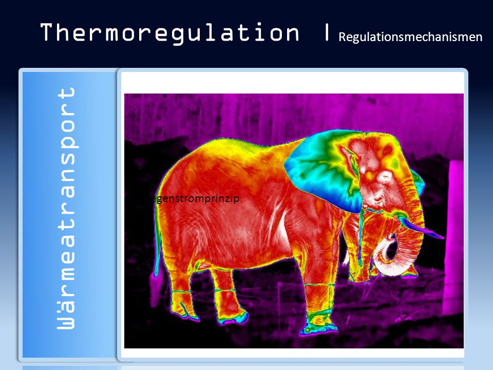 Thermoregulation | Regulationsmechanismen