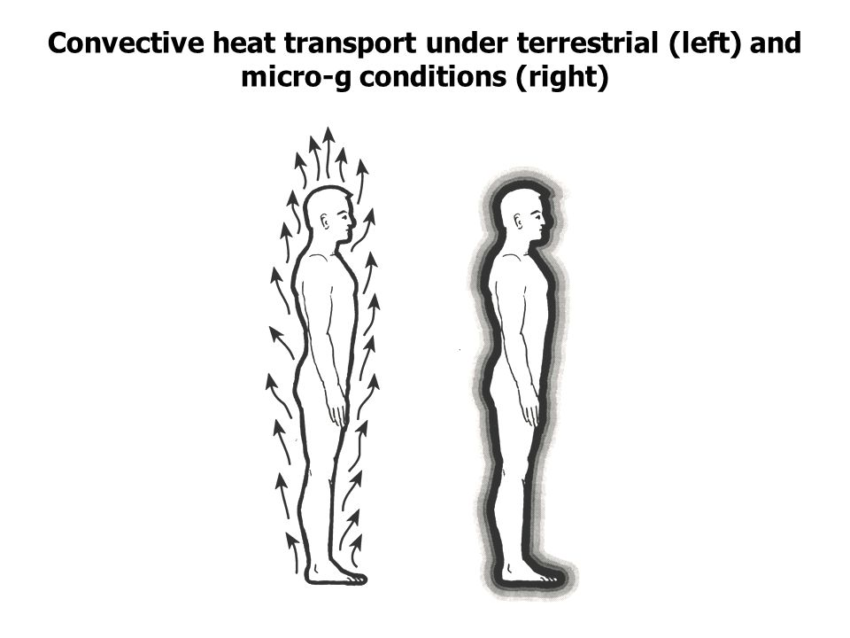 Convective heat transport under terrestrial (left) and micro-g conditions (right)