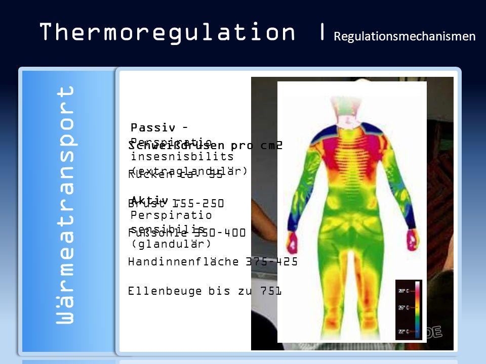 Thermoregulation | Regulationsmechanismen