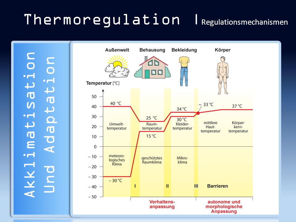 Thermoregulation |Regulationsmechanismen