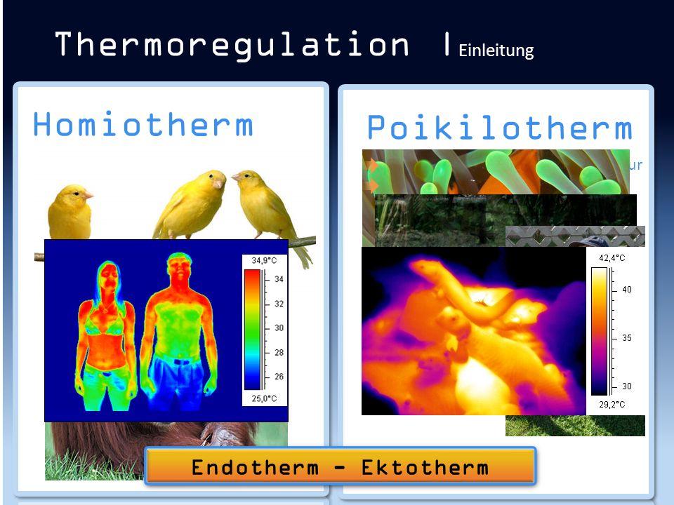 Thermoregulation |Einleitung