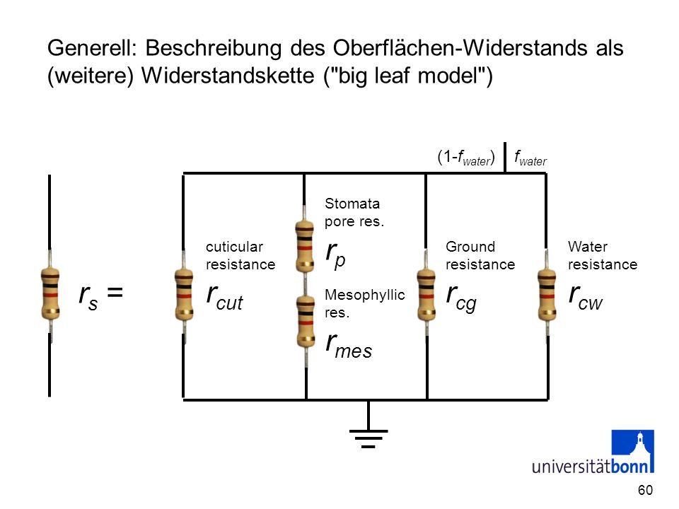 Generell: Beschreibung des Oberflächen-Widerstands als (weitere) Widerstandskette ( big leaf model )