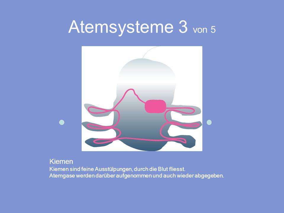 Atemsysteme 3 von 5 Kiemen