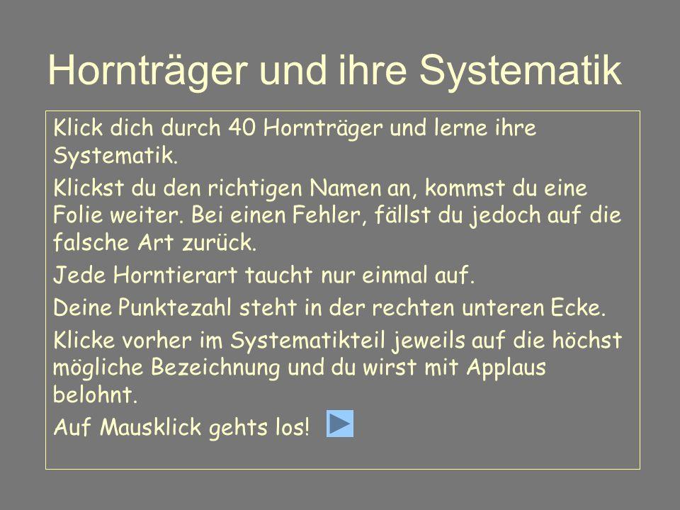 Hornträger und ihre Systematik