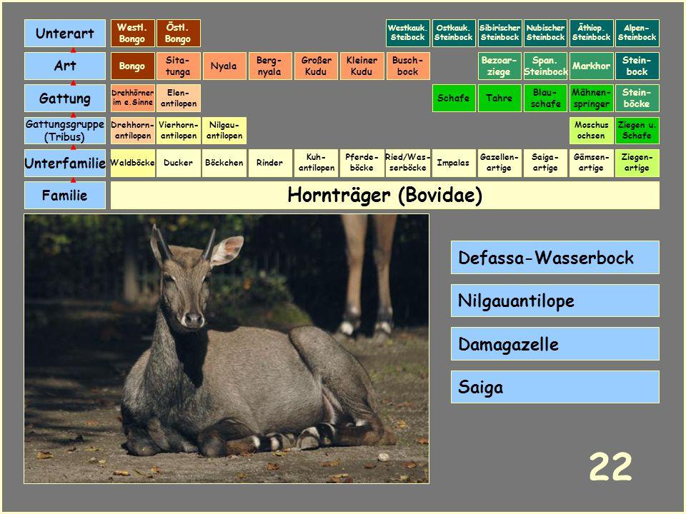 22 Hornträger (Bovidae) Defassa-Wasserbock Nilgauantilope Damagazelle
