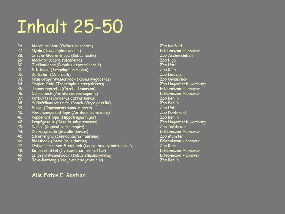 Inhalt 25-50 26. Moschusochse (Ovibos maschata) Zoo Krefeld