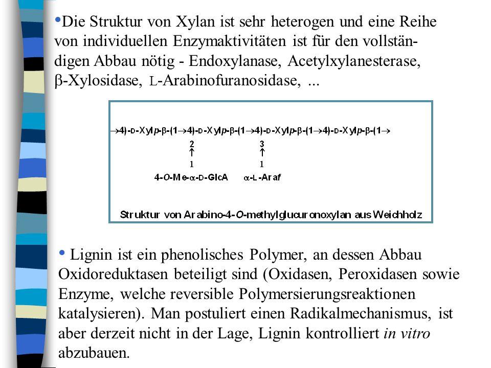 Die Struktur von Xylan ist sehr heterogen und eine Reihe