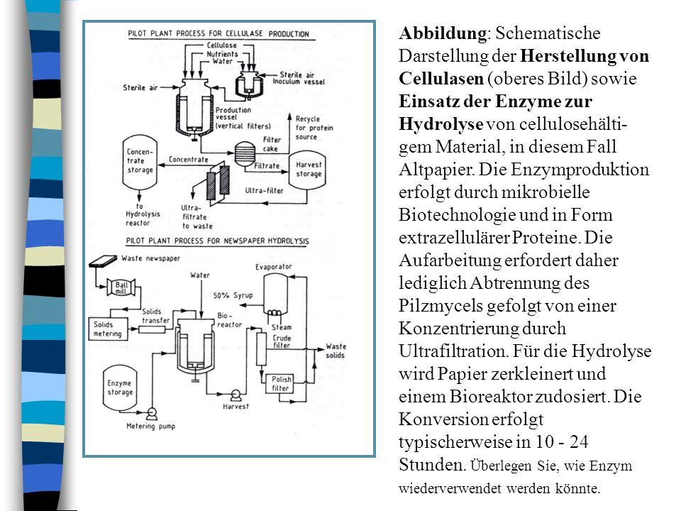 Abbildung: Schematische Darstellung der Herstellung von Cellulasen (oberes Bild) sowie Einsatz der Enzyme zur Hydrolyse von cellulosehälti-gem Material, in diesem Fall Altpapier.
