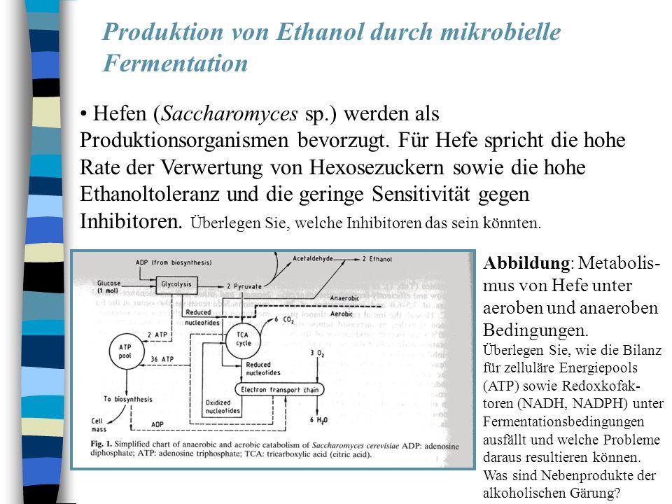 Produktion von Ethanol durch mikrobielle Fermentation