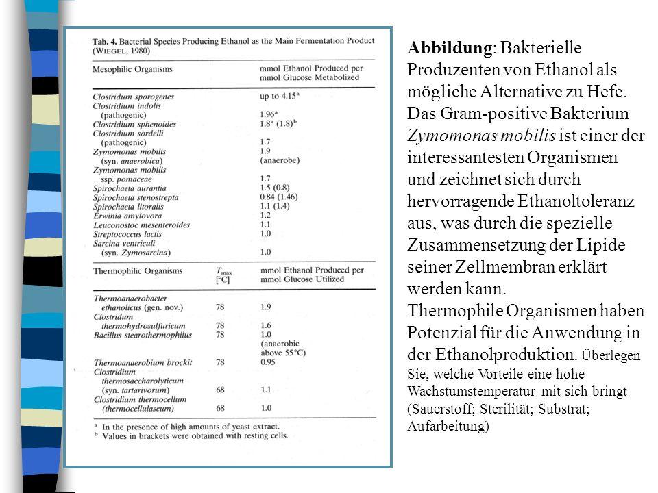 Abbildung: Bakterielle Produzenten von Ethanol als mögliche Alternative zu Hefe.