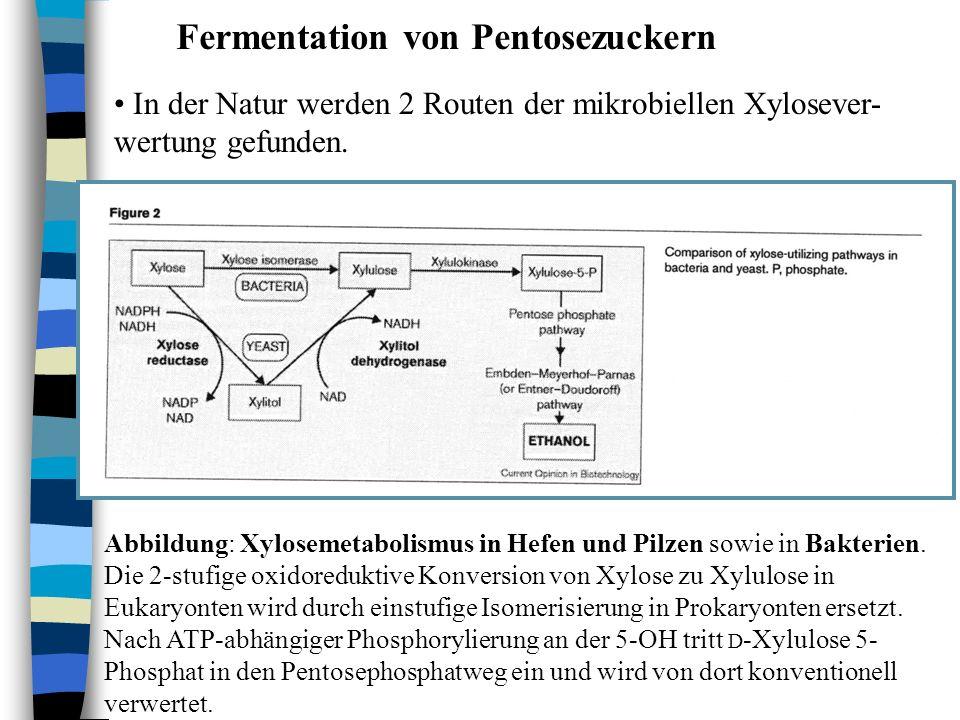 Fermentation von Pentosezuckern