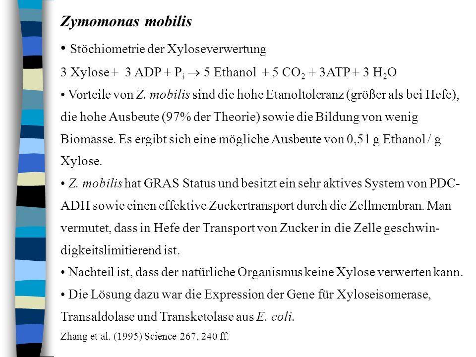 Stöchiometrie der Xyloseverwertung