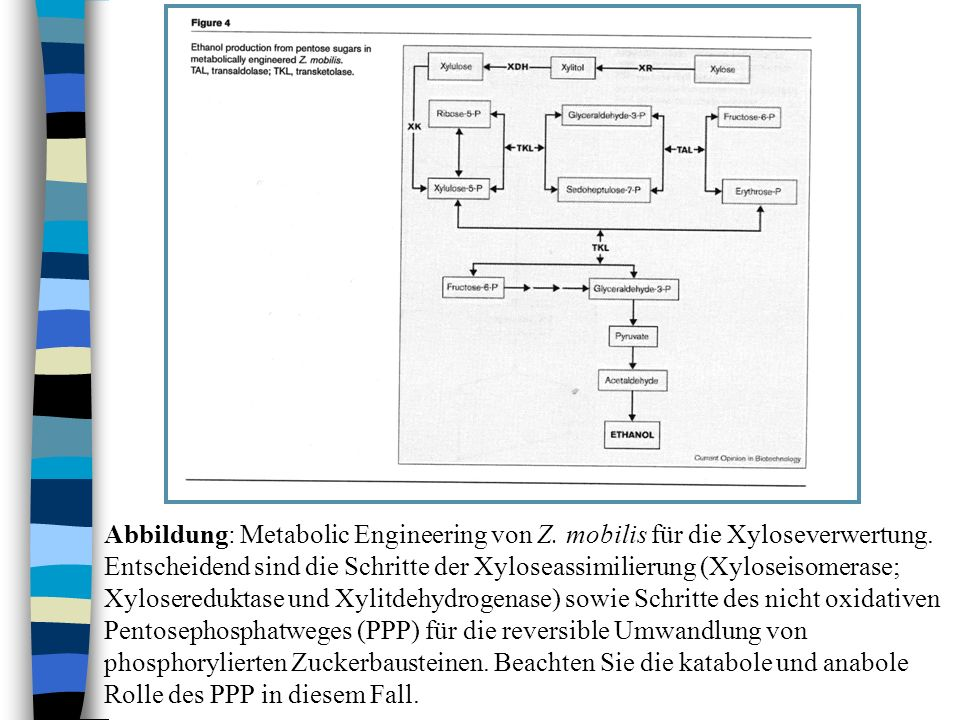 Abbildung: Metabolic Engineering von Z