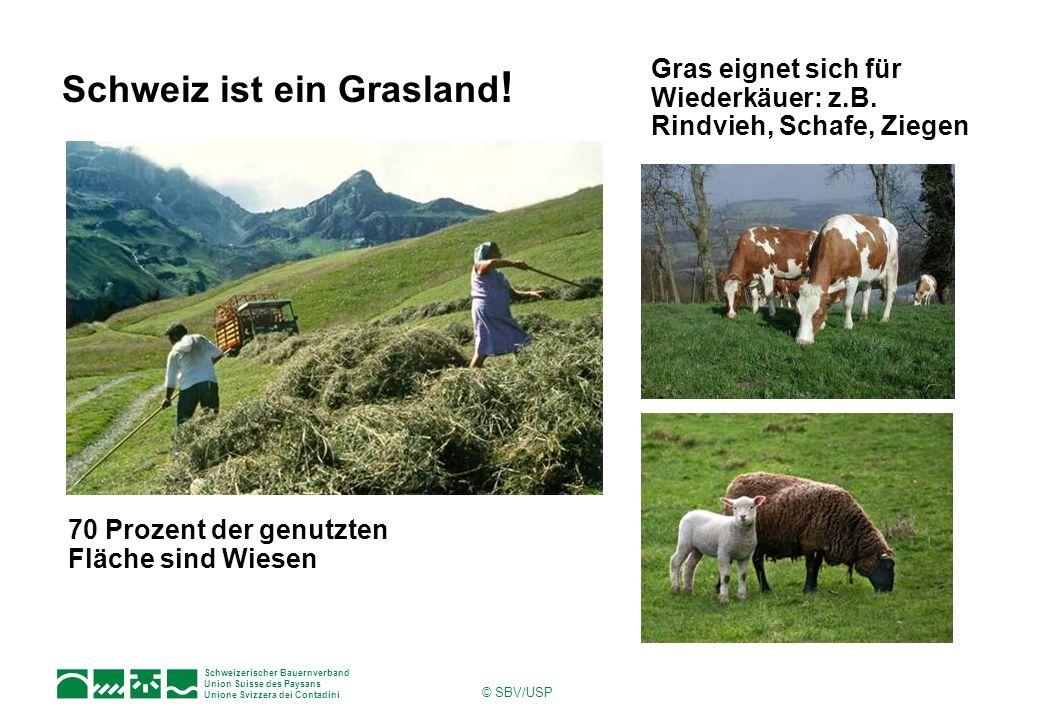 Schweiz ist ein Grasland!