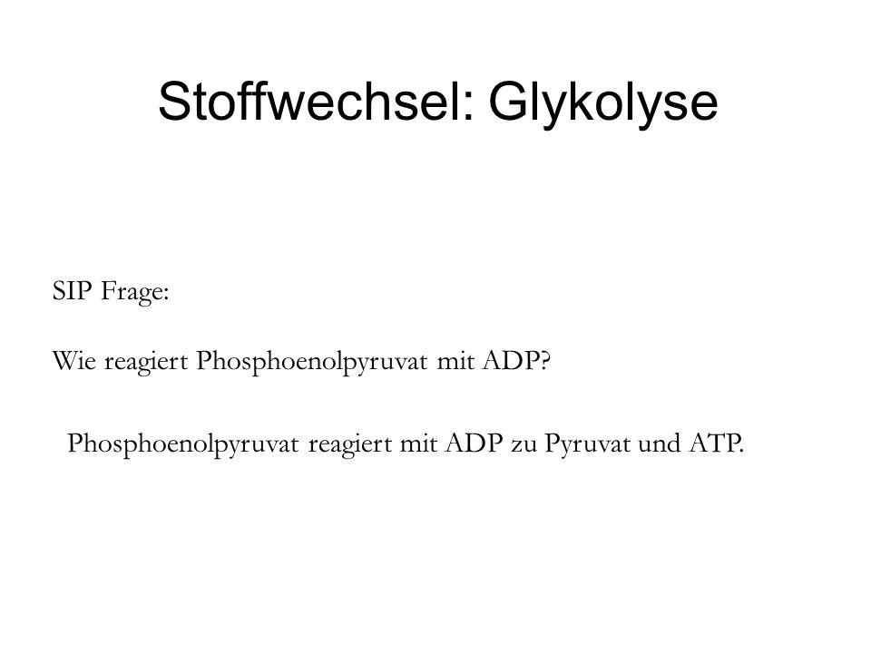 Stoffwechsel: Glykolyse