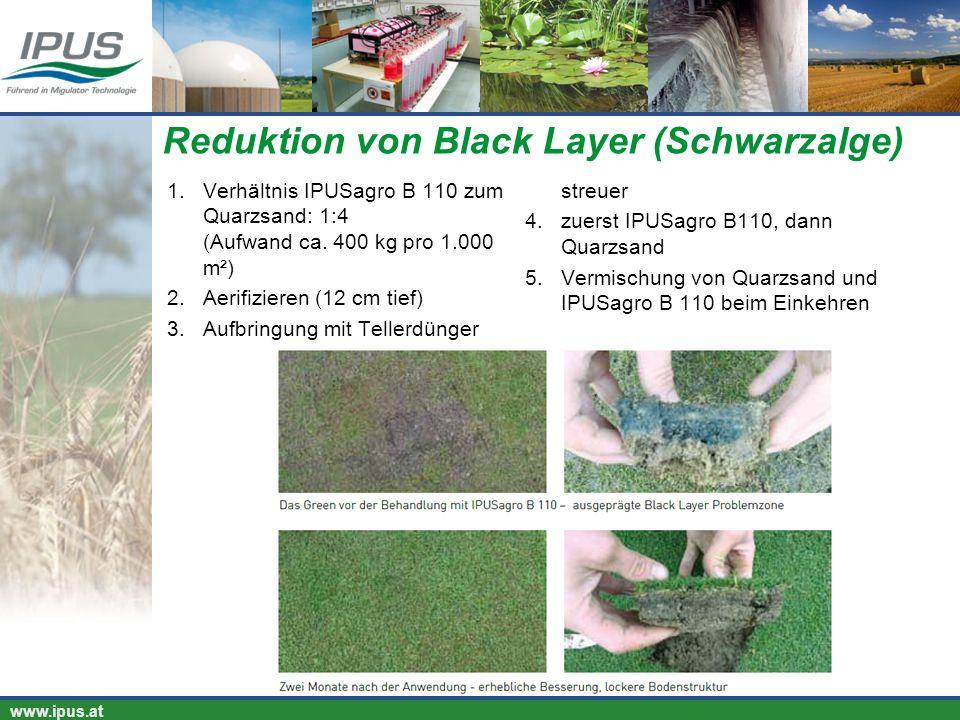 Reduktion von Black Layer (Schwarzalge)