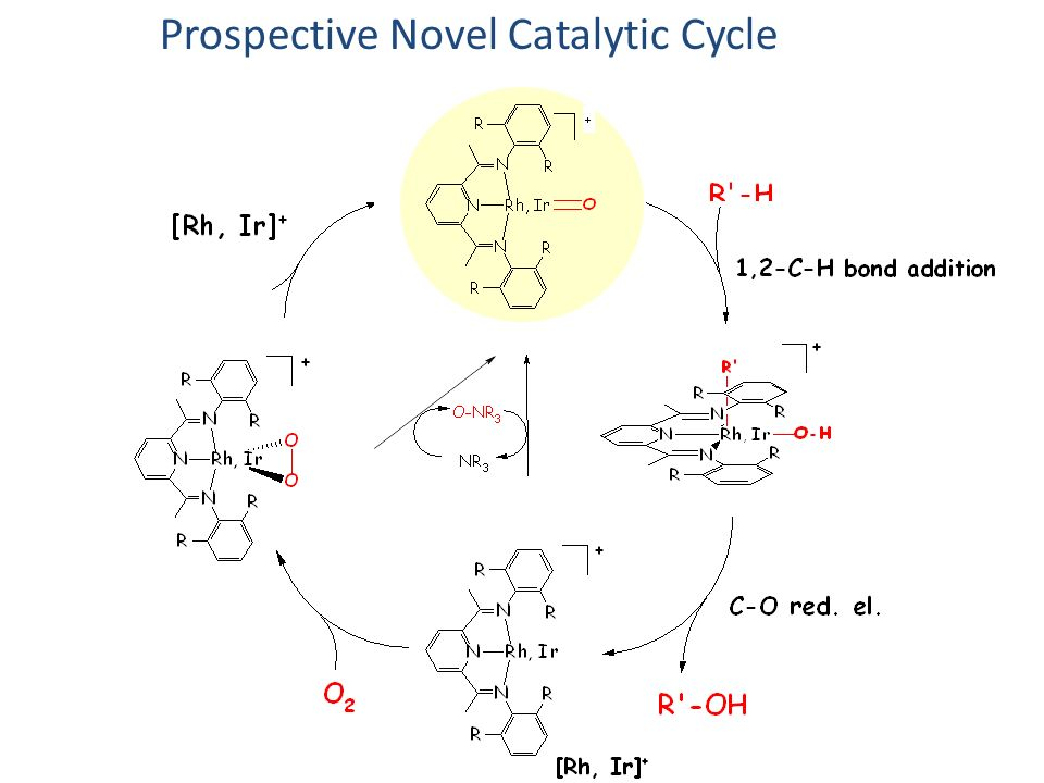Our Claim to Fame Prospective Novel Catalytic Cycle or Failure
