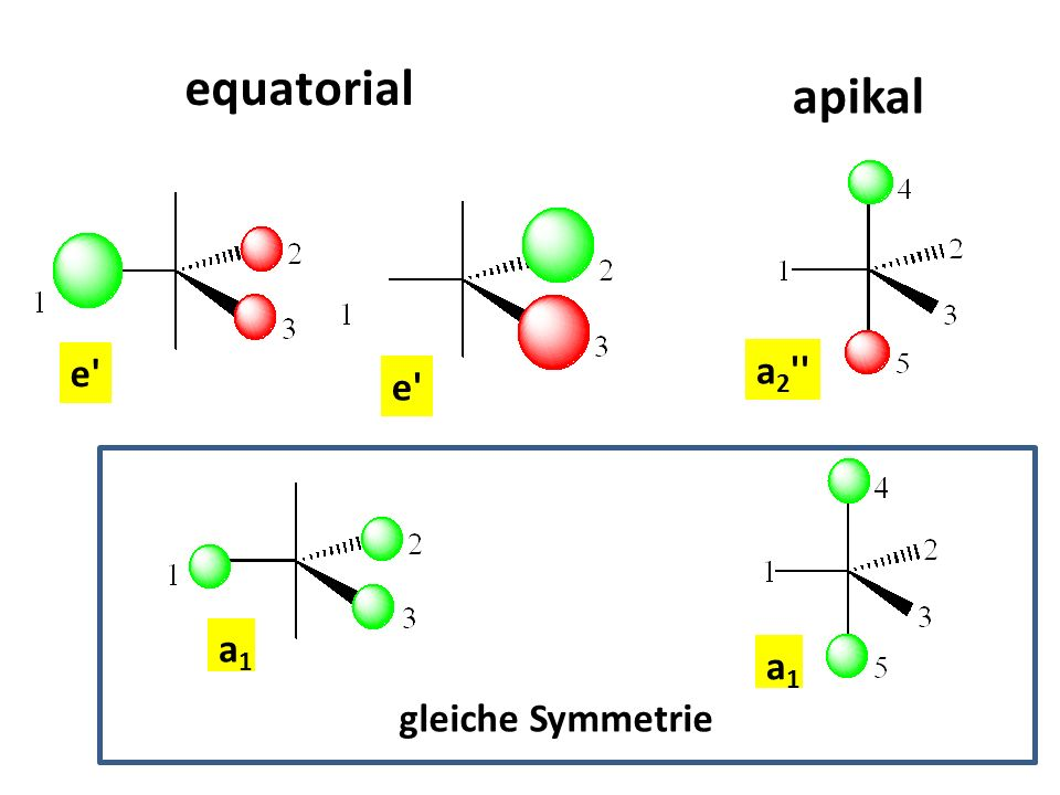 equatorial apikal a2 e e a1 a1 gleiche Symmetrie