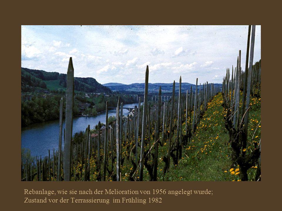 Rebanlage, wie sie nach der Melioration von 1956 angelegt wurde;