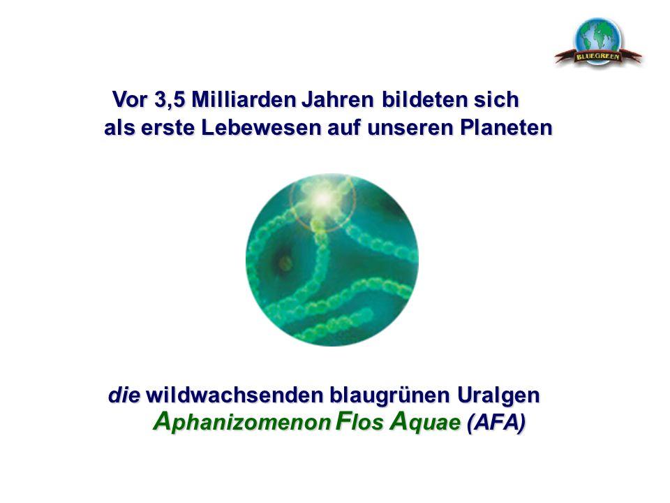 die wildwachsenden blaugrünen Uralgen Aphanizomenon Flos Aquae (AFA)