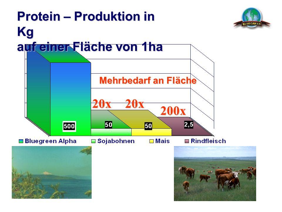 Protein – Produktion in Kg auf einer Fläche von 1ha