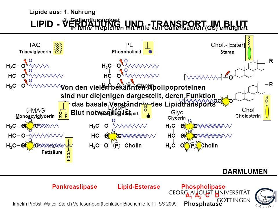LIPID - VERDAUUNG UND -TRANSPORT IM BLUT