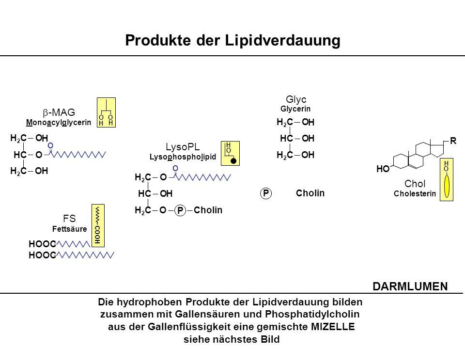 Produkte der Lipidverdauung