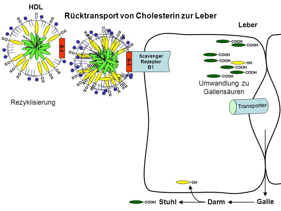 Rücktransport von Cholesterin zur Leber