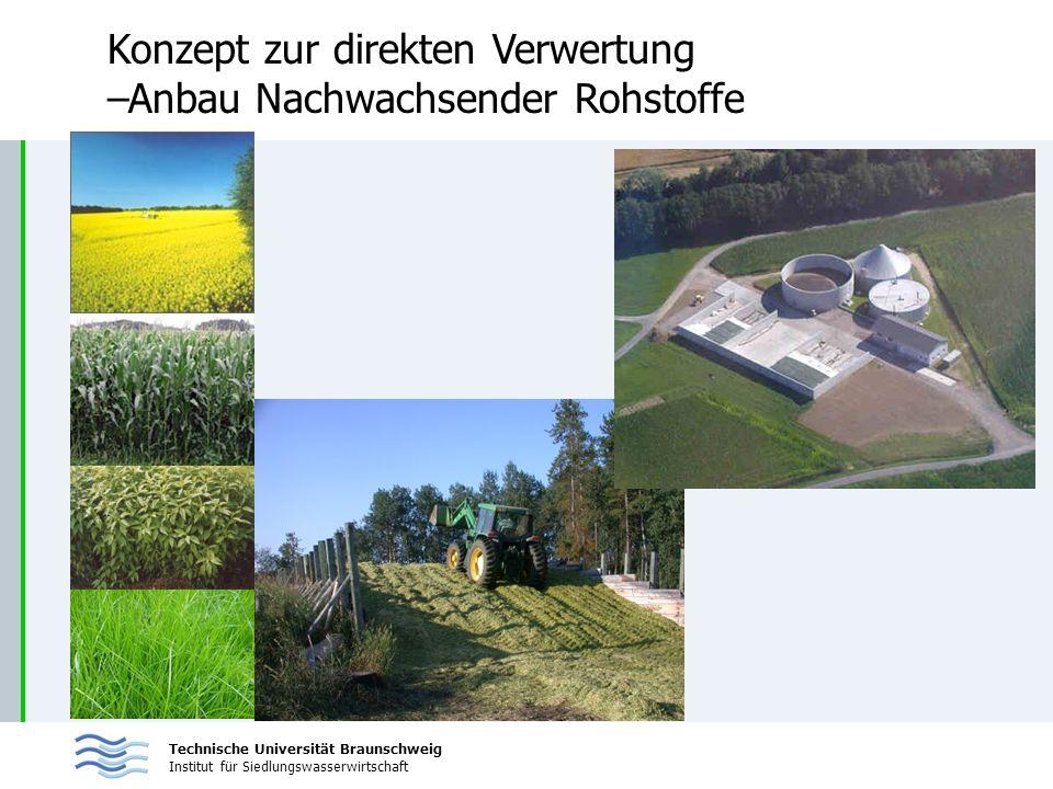 Konzept zur direkten Verwertung –Anbau Nachwachsender Rohstoffe