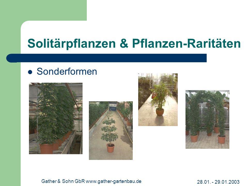 Solitärpflanzen & Pflanzen-Raritäten