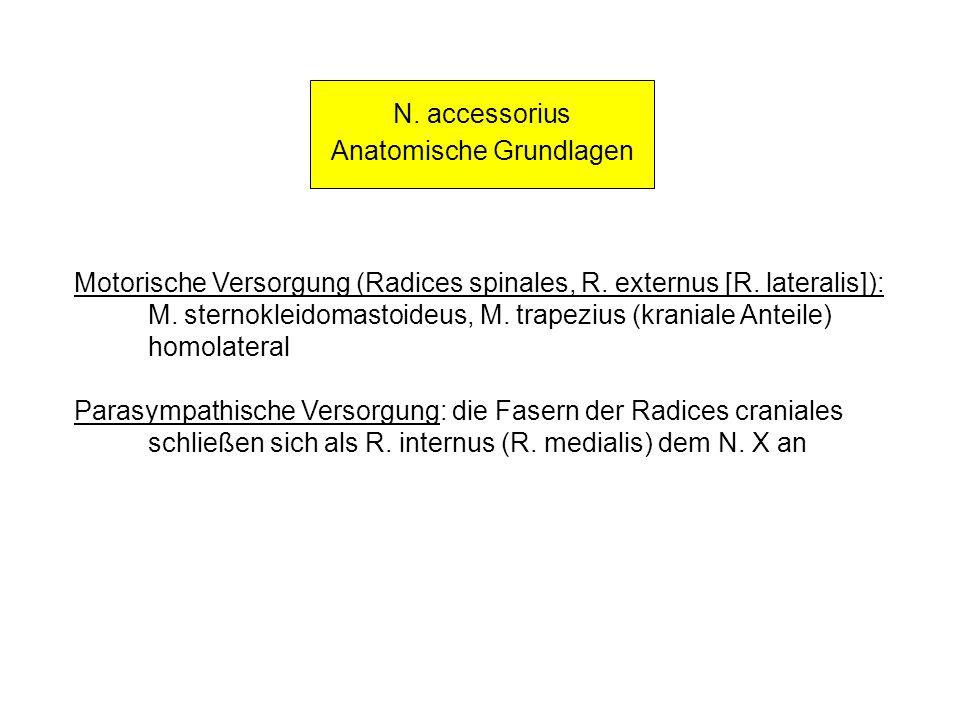 Anatomische Grundlagen