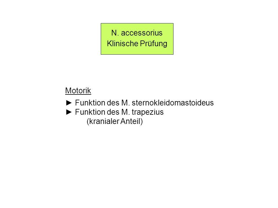 N. accessorius Klinische Prüfung. Motorik. ► Funktion des M. sternokleidomastoideus. ► Funktion des M. trapezius.