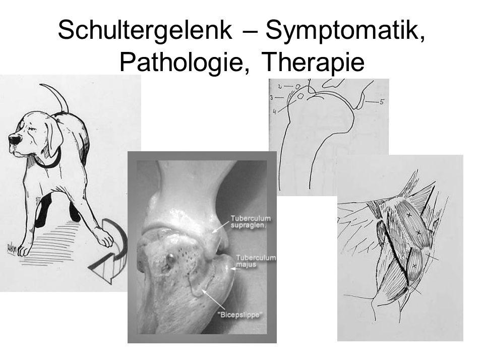 Schultergelenk – Symptomatik, Pathologie, Therapie