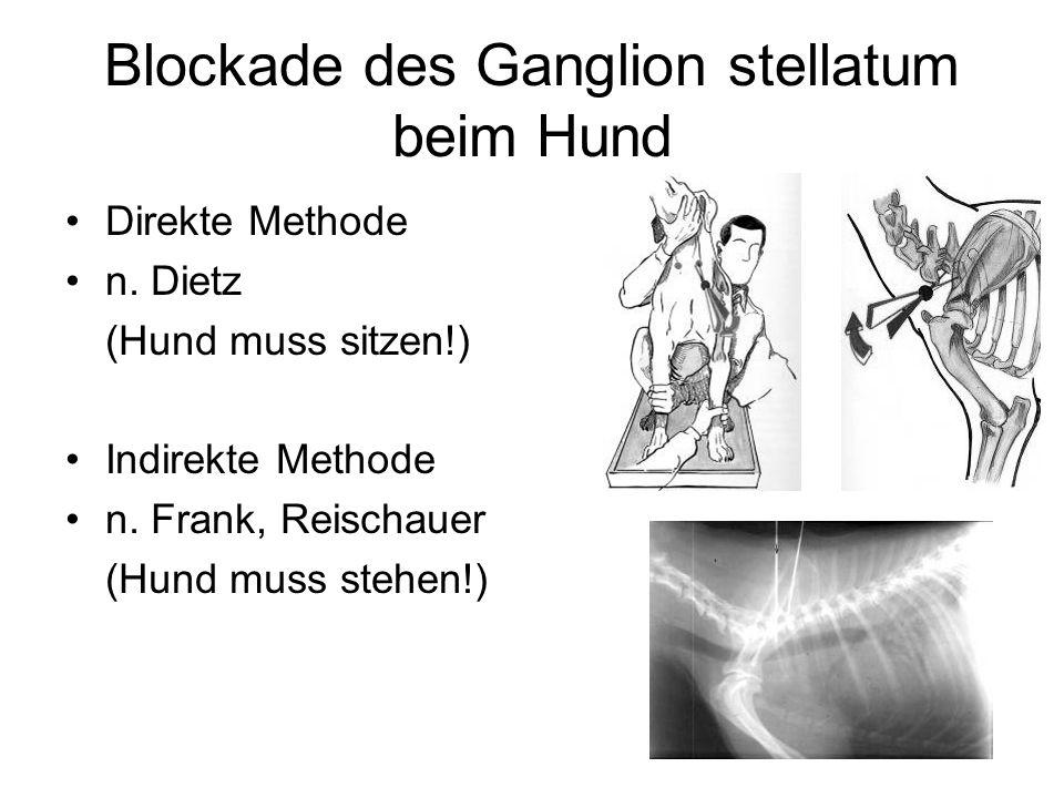 Blockade des Ganglion stellatum beim Hund