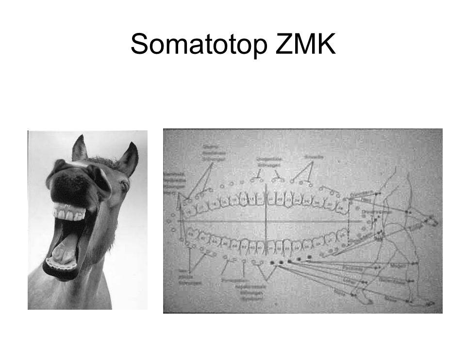 Somatotop ZMK