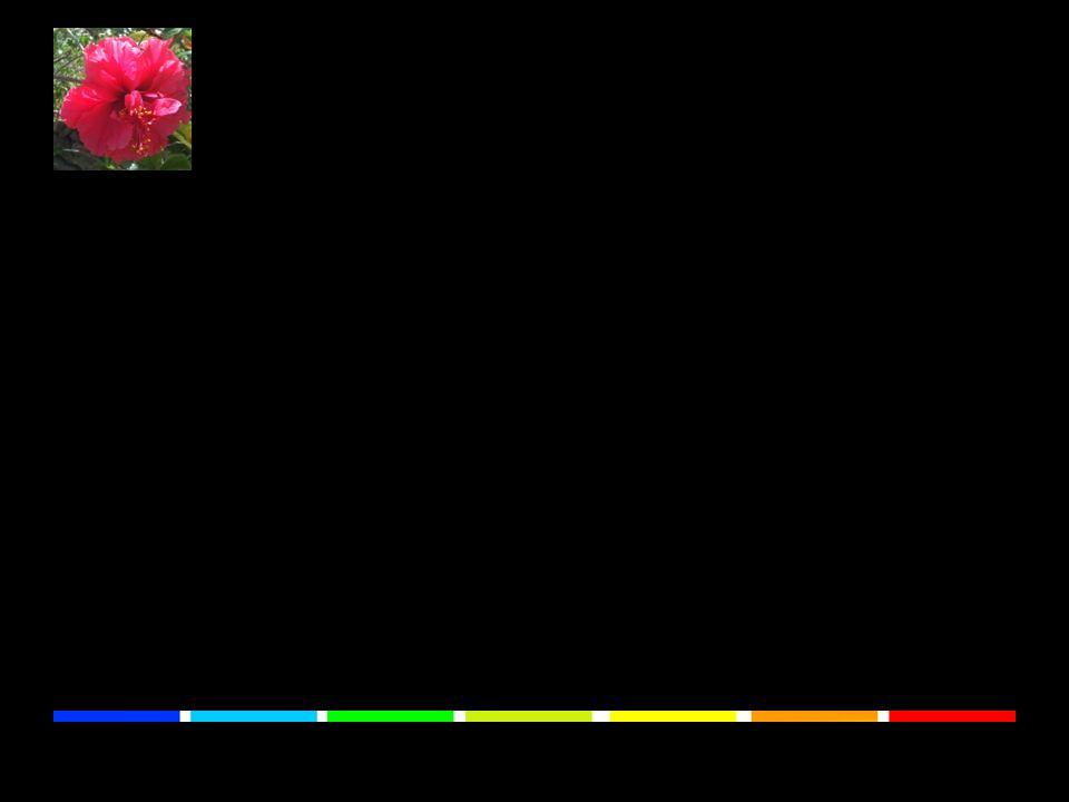 Unterschiedliche Stoffe reagieren verschieden auf den Einfall von Licht. Das ermöglicht es unseren Augen, Dinge zu unterscheiden.