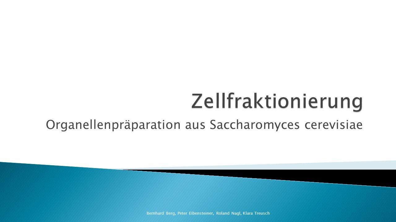 Organellenpräparation aus Saccharomyces cerevisiae