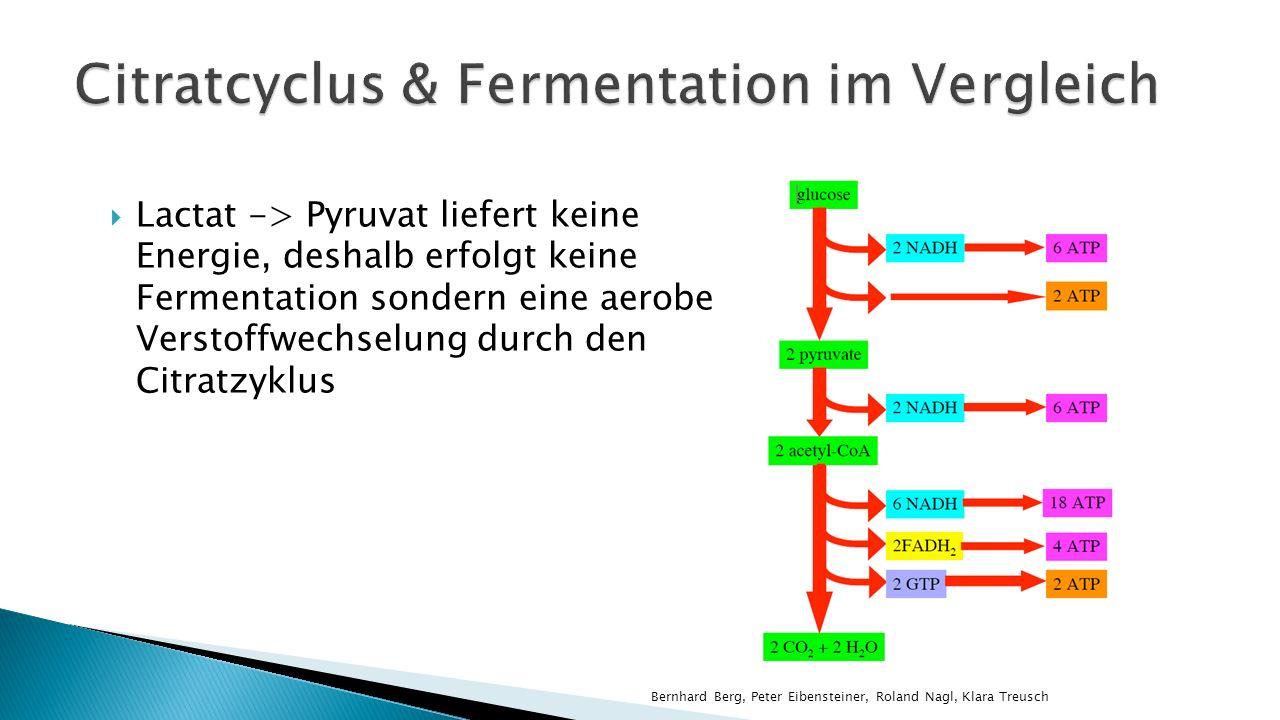 Citratcyclus & Fermentation im Vergleich
