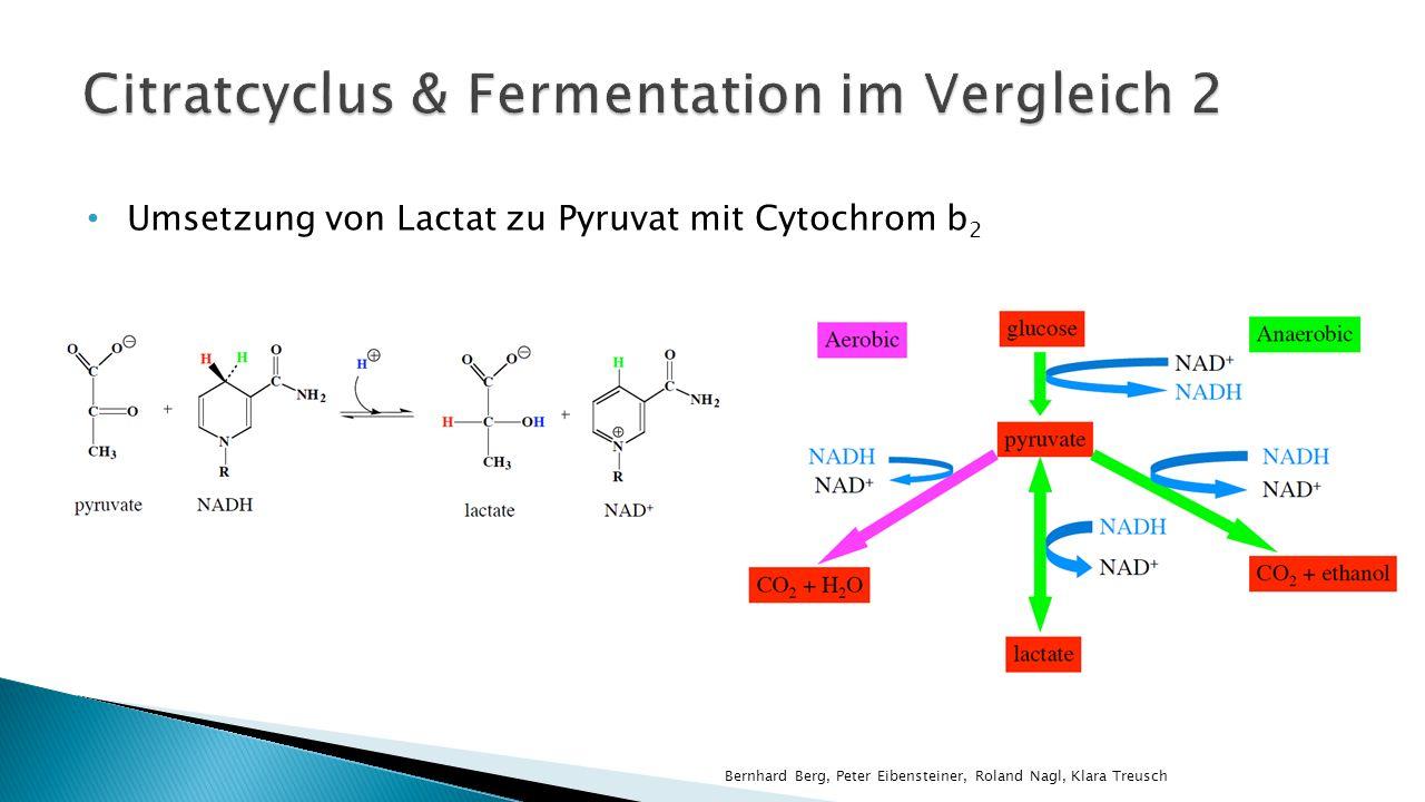 Citratcyclus & Fermentation im Vergleich 2