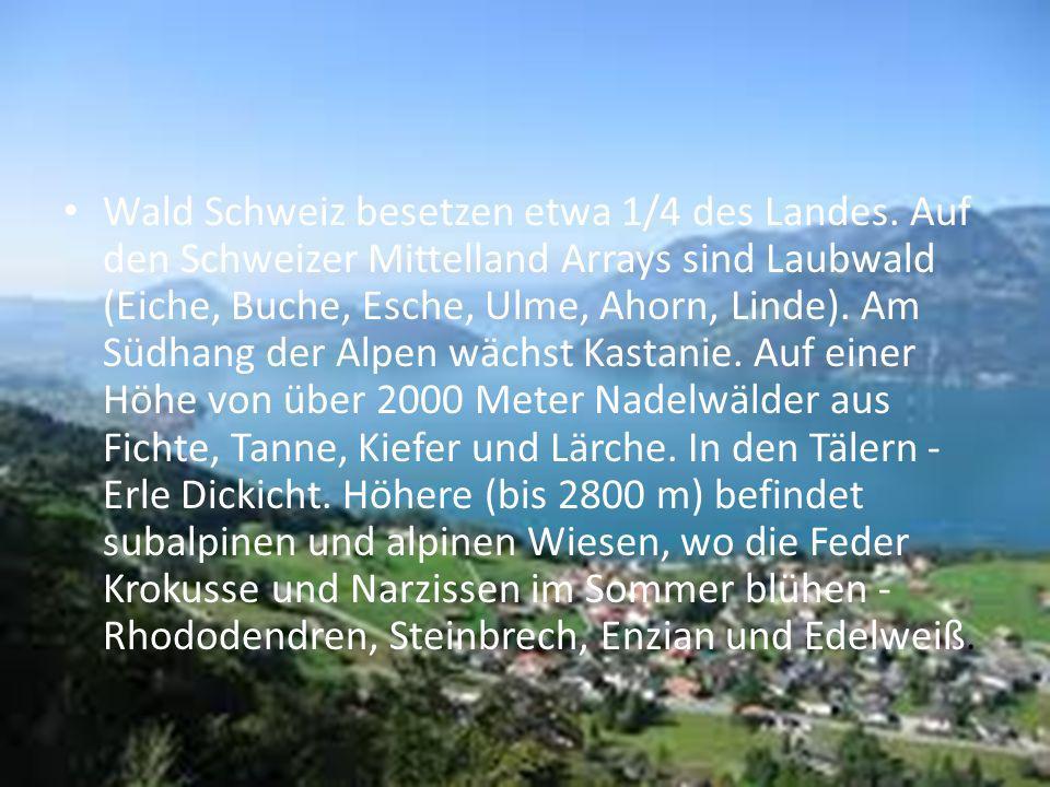 Wald Schweiz besetzen etwa 1/4 des Landes