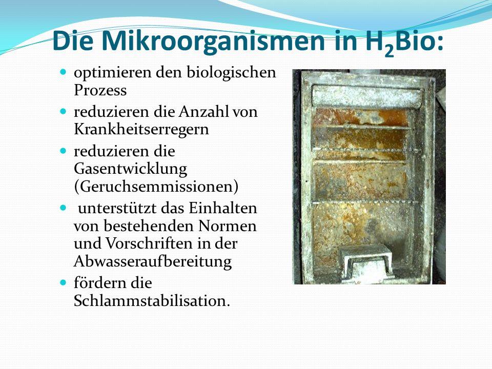 Die Mikroorganismen in H2Bio: