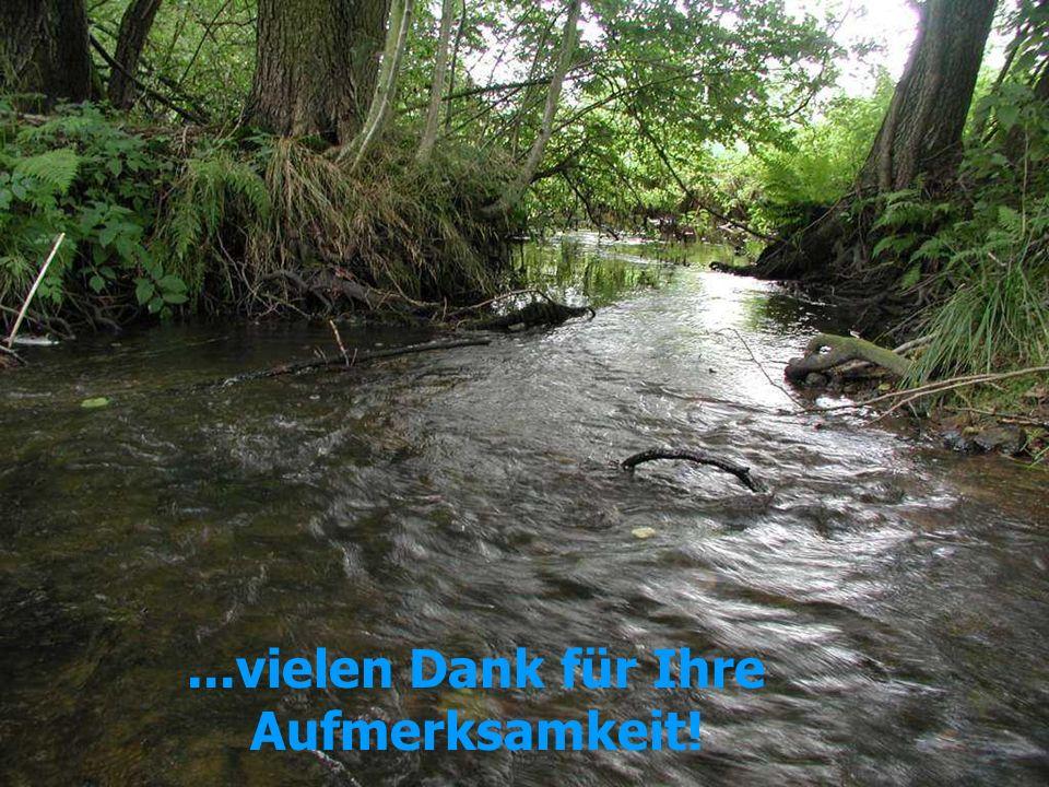 Eigendynamische Entwicklungen an den Verbandgewässern