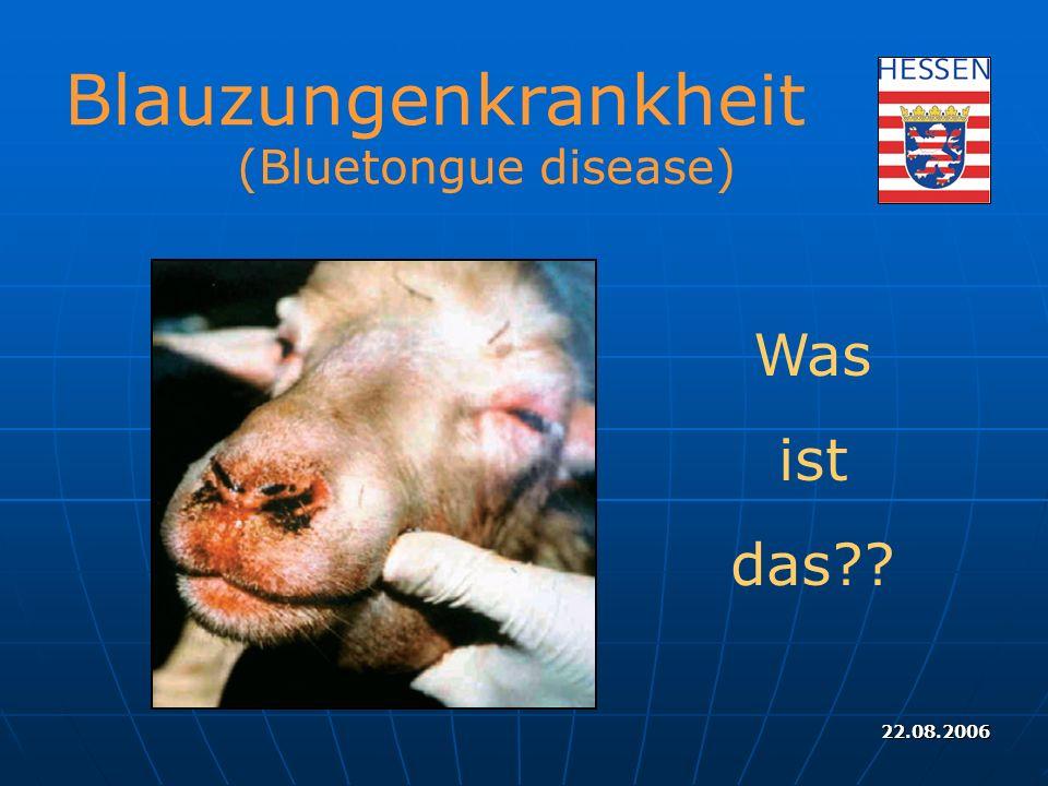 Blauzungenkrankheit (Bluetongue disease) Was ist das 22.08.2006