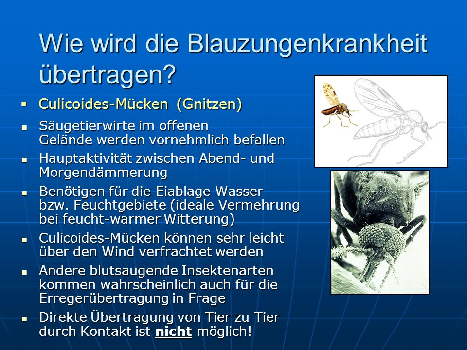 blauzungenkrankheit bluetongue disease was ist das ppt herunterladen. Black Bedroom Furniture Sets. Home Design Ideas