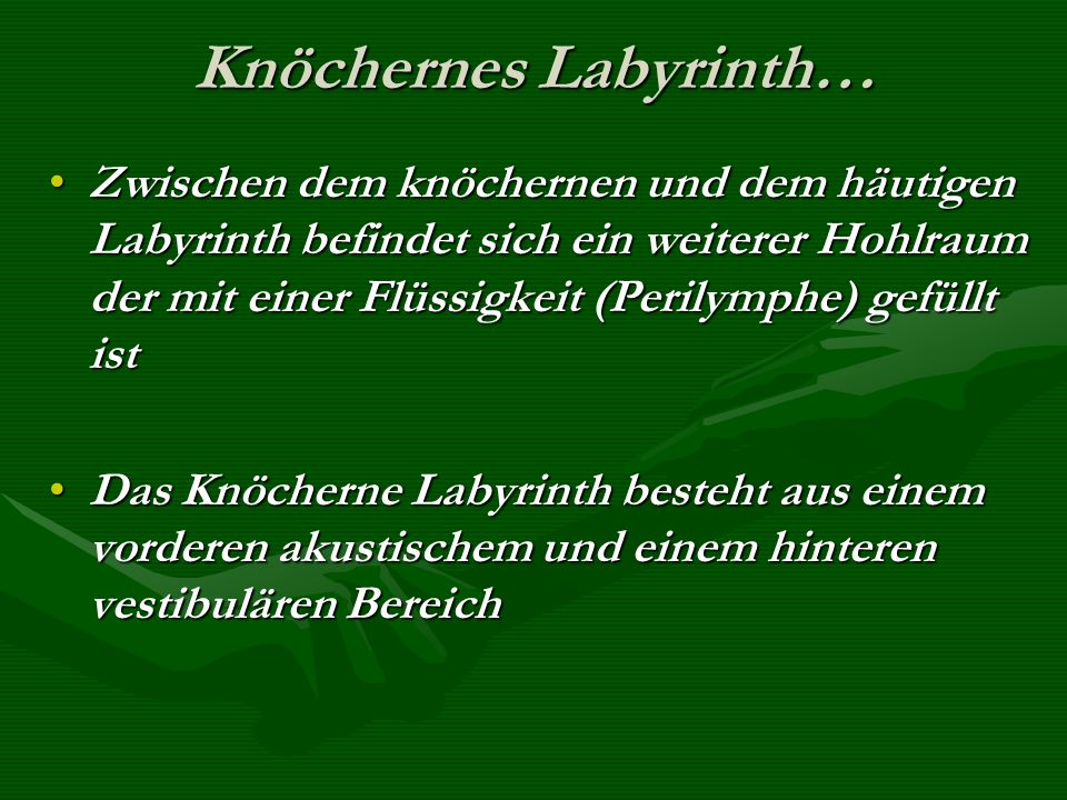Knöchernes Labyrinth…